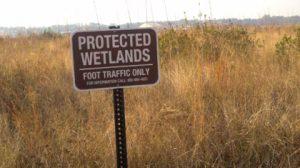 wetlands-300x168